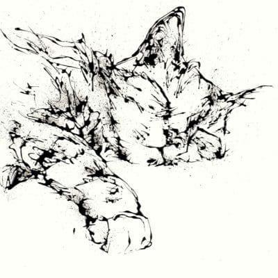 sleeping cat kathryn callaghan fine art print