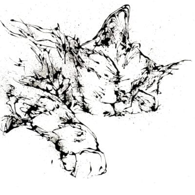 Dreamer Sleeping Cat Paper Print
