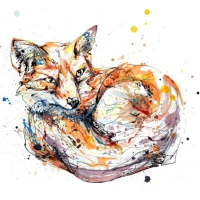 Awaken Curled Fox Fine Art Print