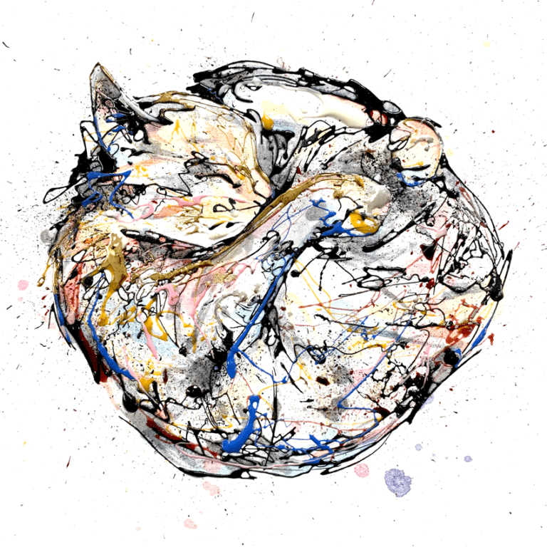 cat curled up in a ball