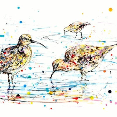 Reflections Curlews Original Image
